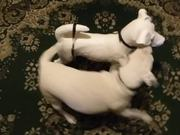 Watch free video Cute Dog Playing