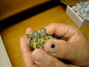 Watch free video Mutant Turtle with Two Heads