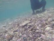 Mira dibujos animados gratis Tropical Fishes while Snorkelling in Uganzaki