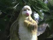 無料アニメのSnook the Sloth at Santa Barbara's Earth Dayを見る