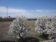 Watch free video Virginia Springtime