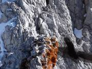 Watch free video Schladming Dachstein