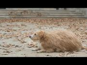 Watch free video Ikea Commercial: A Fat Dog