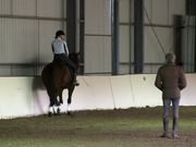 Training for Wellness with Manolo Mendez Dressage