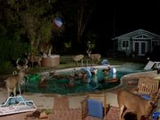 Watch free video Farmers Insurance Commercial: Stag Pool Party
