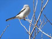 Watch free video White Cute Little Bird