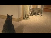 Watch free video Cat vs Kitten