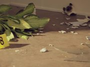 Watch free video Geico Campaign: Little Advice - Theft