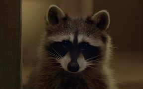 Watch free video Beeline Commercial: Raccoon