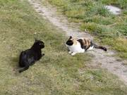 Watch free video Cats Playing