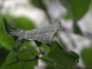 Watch free video Rain on a Leaf in Slow Motion