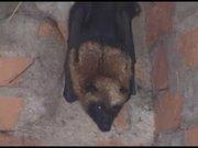 Watch free video Iguanas, Millipedes & Bats