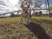 Watch free video Tito IS a Funny Dog