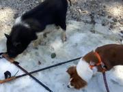 Watch free video Kozmo Meets a Friend