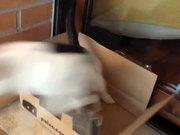 Watch free video Pazzino e La Scatola (Pazzino and the Box)