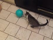 Watch free video Cat and Balloon