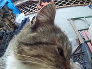 ดูการ์ตูนฟรี Rural Funny Cats