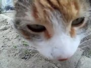 Watch free video Rural Funny Cats