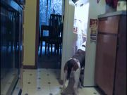Watch free video Fridge Raiding Basset Hound