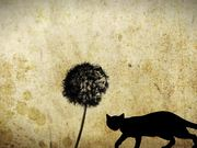 Watch free video Dandelion - Animated Short by Klee Benally