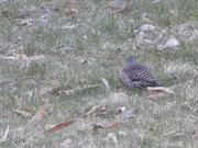 Watch free video Curious Little Bird