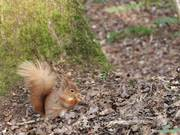 Watch free video Squirrel at the Nature Reserve 4