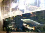 Mira dibujos animados gratis Strange Fishes