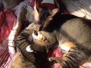 Watch free video The Story of Two Cats p-t 1