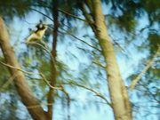 ดูการ์ตูนฟรี Island of Lemurs: Madagascar - Official Trailer
