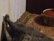 ดูการ์ตูนฟรี Cat Playing With a Ribbon