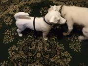 Watch free video Smokey Meets Frenchie