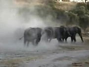 Watch free video Elephants Like to to Bathe in the Sand