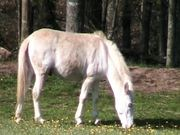 Watch free video White Pony Munching Buttercups
