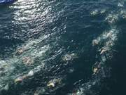 Watch free video The Rip Race - Australia's most extreme swim