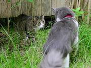 Watch free video Schumacher The Cat