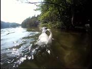 Watch free video Dog Wash Day