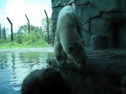 Watch free video A Polar Bear Film