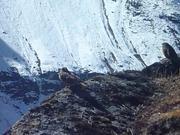 Watch free video Mount Everest Marathon 2013 - One Epic Adventure