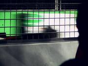 Watch free video Behind the Fence - The Singapore F1 Grand Prix