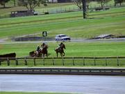 Watch free video Coalition for the Protection of Racehorses