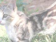 צפו בסרטון מצויר בחינם Greek Cats