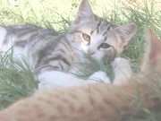 Watch free video Greek Cats