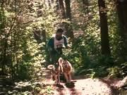 Watch free video Sled Dog Racing Westerlo Belgium 2011