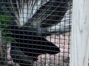 Watch free video Blank Park Zoo