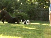 Watch free video Bye Bye Lil' Cow