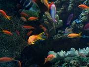 Mira dibujos animados gratis Cute Fishes Swimming