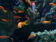 Cute Fishes Swimming