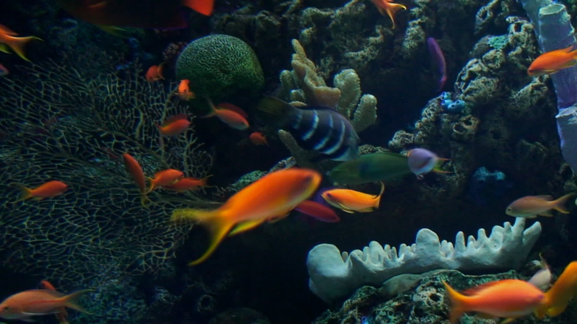 Watch free video Cute Fishes Swimming