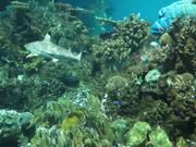 Mira dibujos animados gratis Baltimore Aquarium