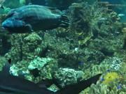 Mira el vídeo gratis de Baltimore Aquarium
